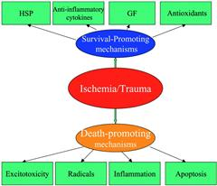 A Review On Mechanism Of Ischemic Brain Injury