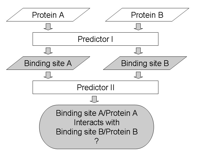 Protein Binding