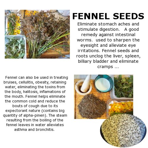 how to prepare fennel seed water for weight loss